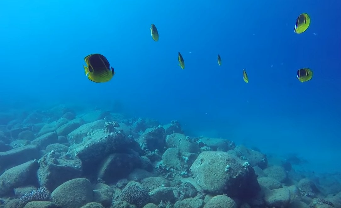 scuba diving kauai reviews,kauai hawaii scuba diving,scuba diving on kauai-min