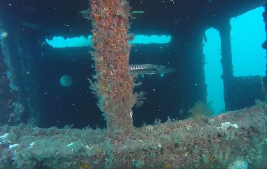 scuba diving myrtle beach sc,myrtle beach scuba diving-min