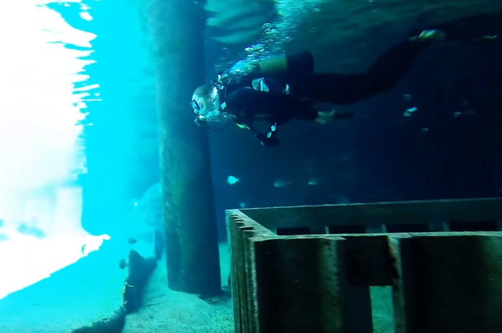 scuba diving without certification,ushaka marine, scuba diving water park