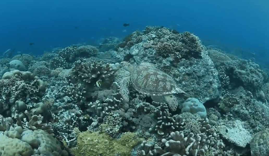seaturtle Hidden Indonesia Scuba Diving Resorts-min