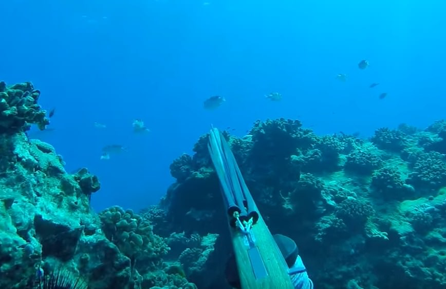 Hawaii spearfishing regulations of fish has problems