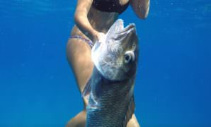 One of spearfishing hawaii types are safe fish include smaller parrots