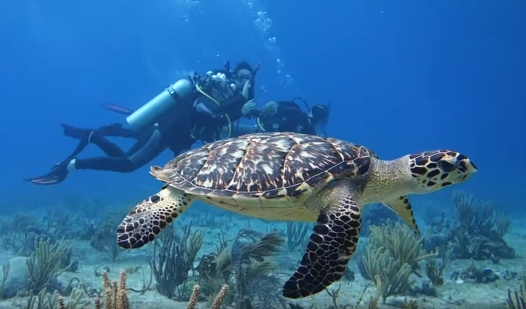 The Geeky Scuba Diving in Punta Cana, Dominican Republic