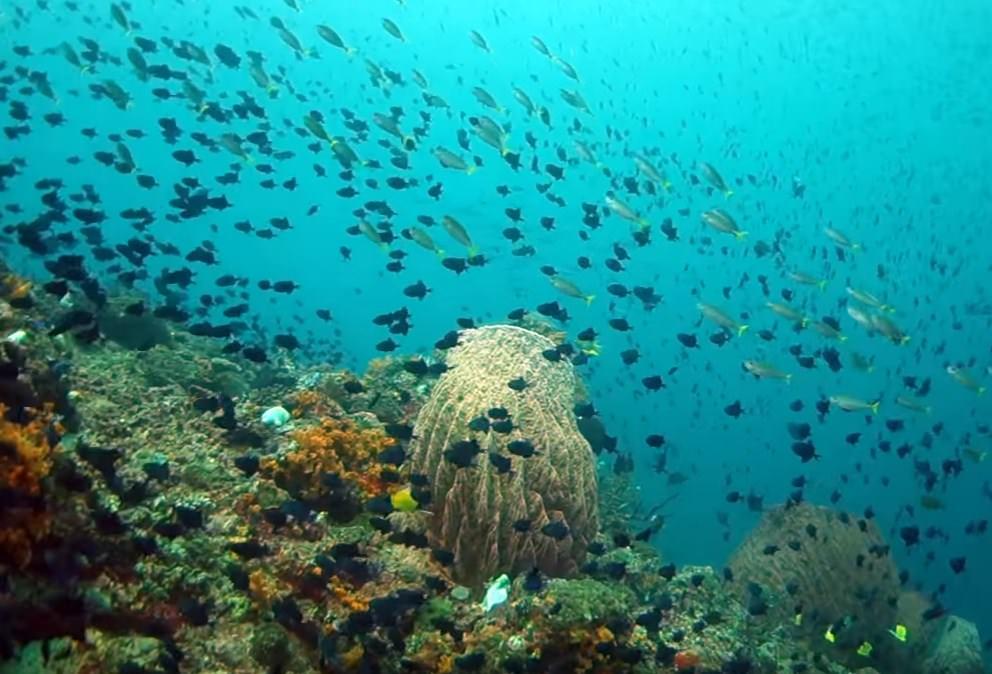 Ambon The Top Secret Scuba Diving Spot in Indonesia