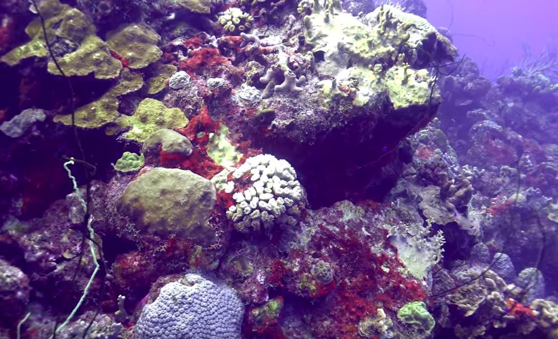Cayman scuba diving