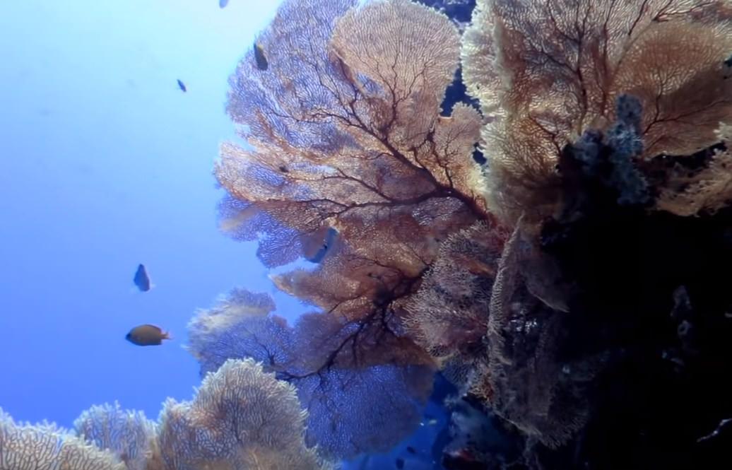 Hukurila Cave Ambon The Top Secret Scuba Diving Spot in Indonesia