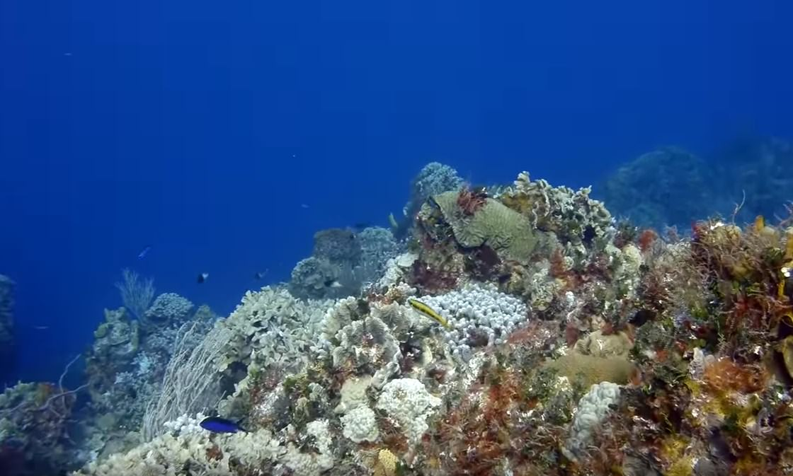 Maaya Thila Scuba Diving