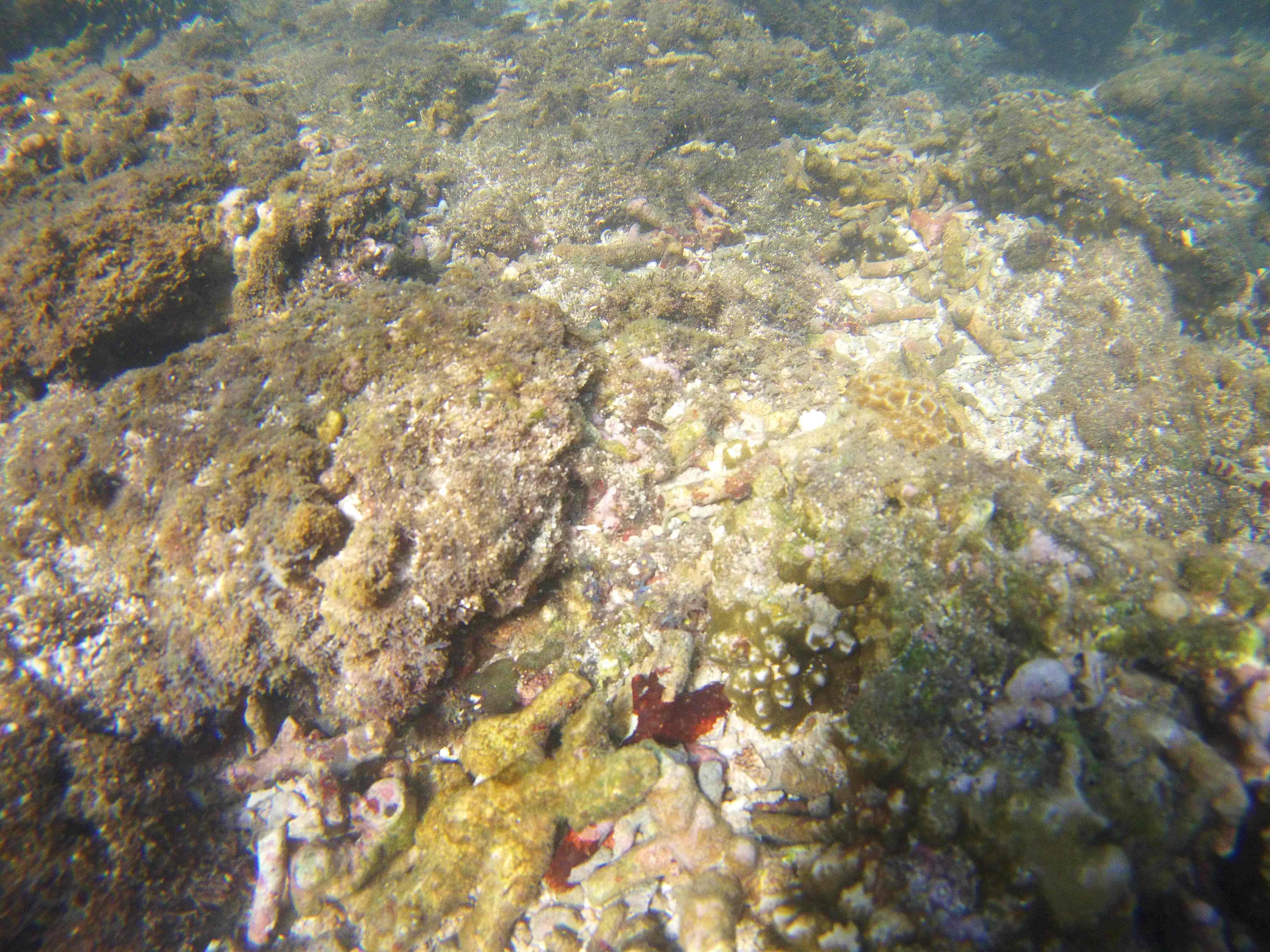 coral reef conservation internships-min