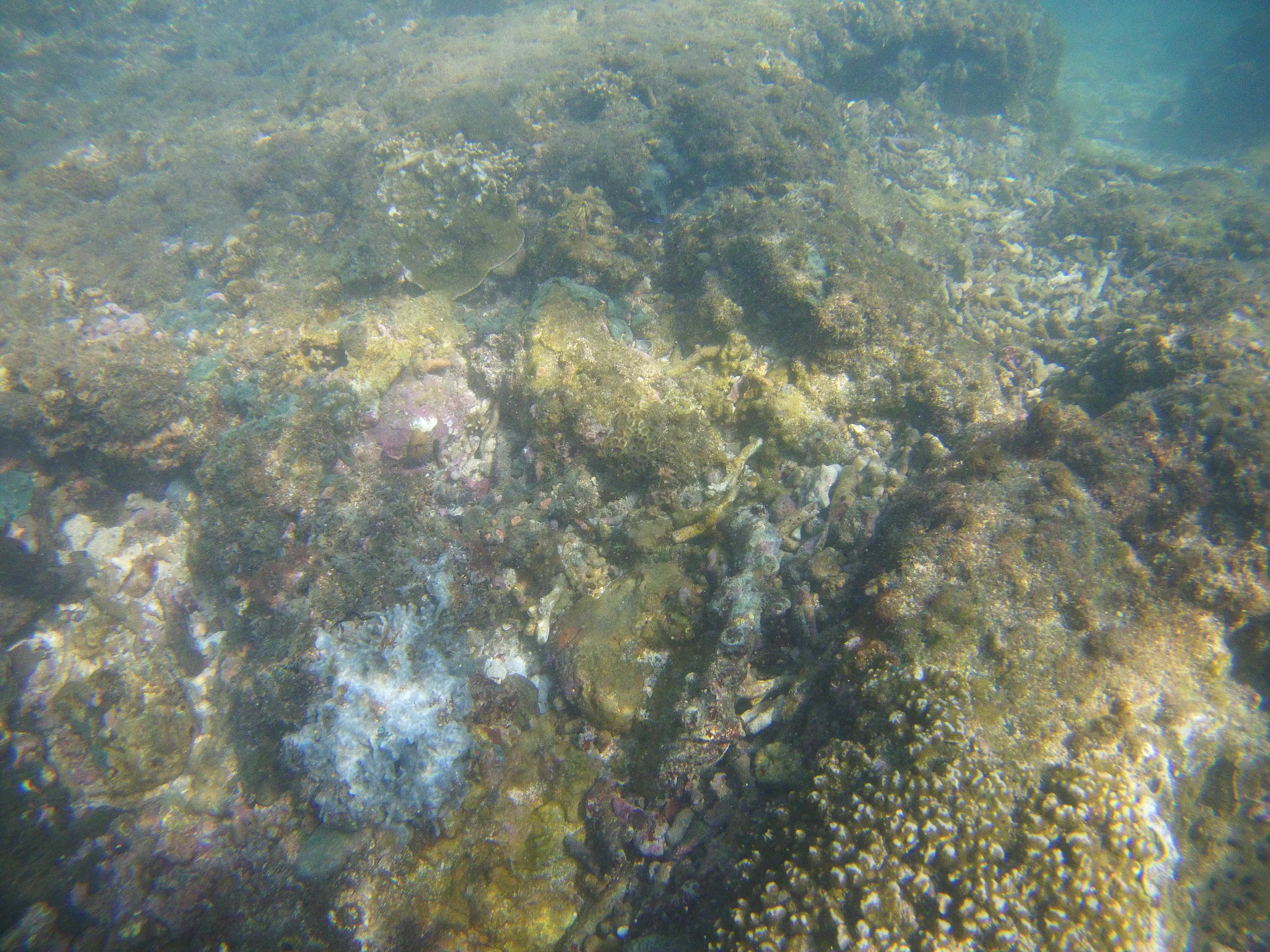 coral reef pictures-min